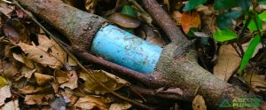 8 Signs of Tree Root Infiltration in Pipes